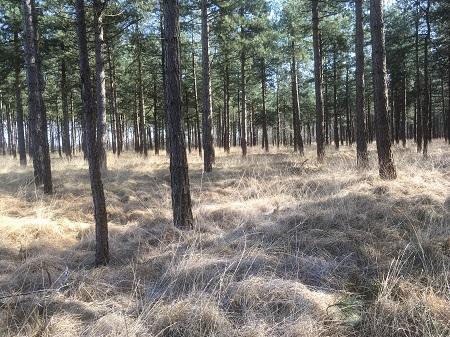 asverstrooien in het bos Chaam 16 maart 2017 website 2